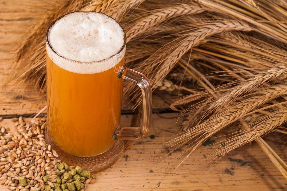 Source de protéines végétales : la levure de bière.