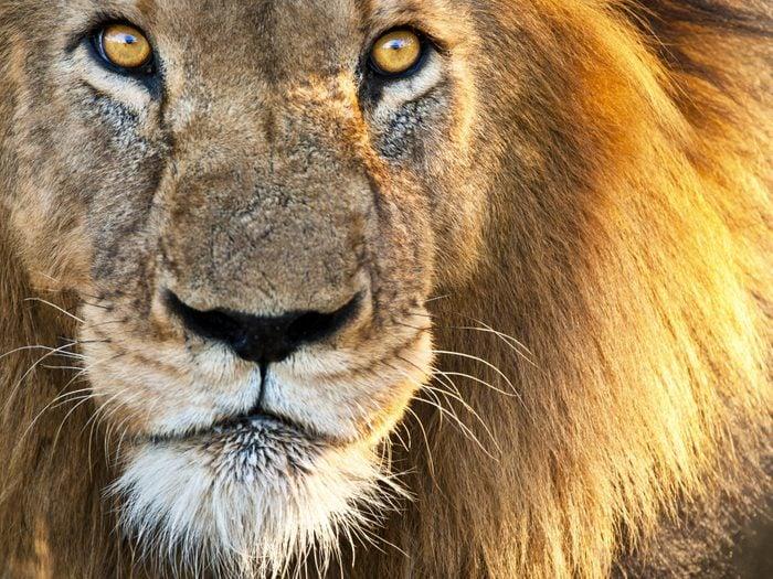 Jardin zoologique national d'Afrique du Sud