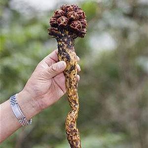 6. Le «petit ermite» du Mexique