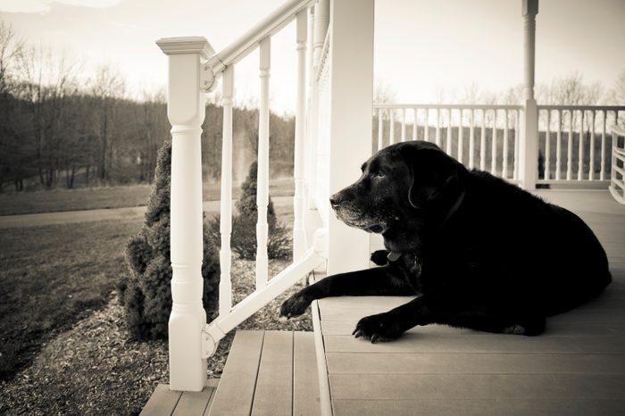 5. Combien d'années vit un chien?