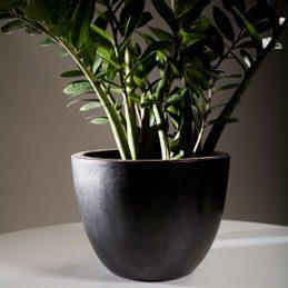 Faire briller les feuilles des plantes d'intérieur