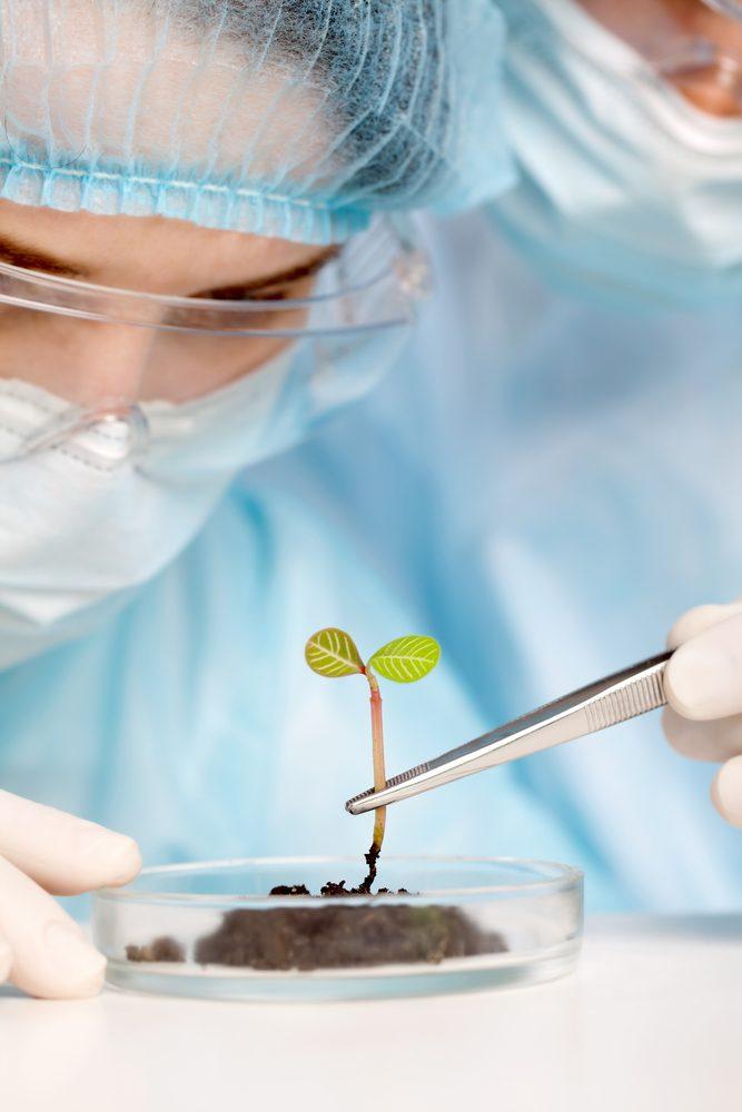 3. Les études faits en Europe sur les plantes médicinales