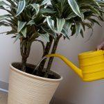 Les 7 meilleures plantes d'intérieur pour votre santé