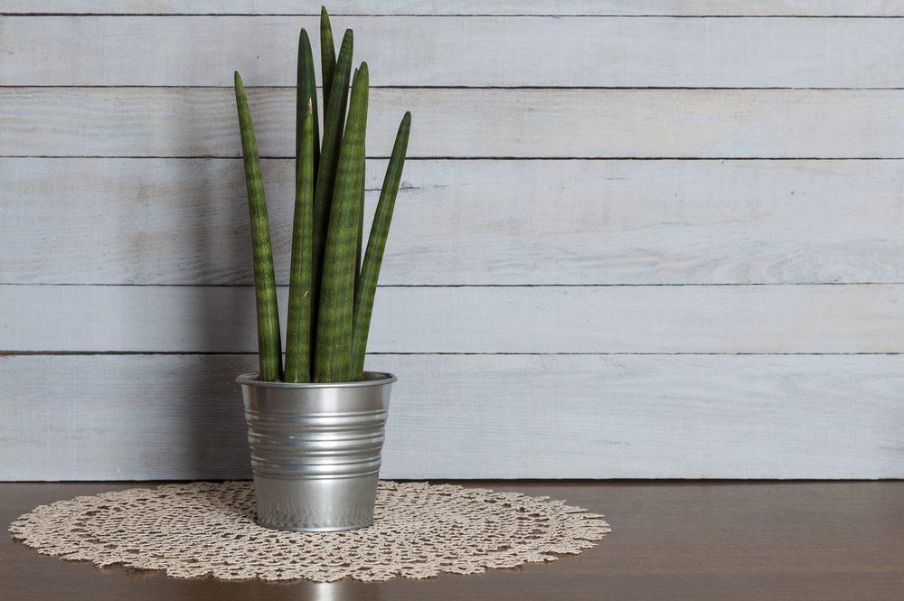 les 7 meilleures plantes d 39 int rieur pour la sant. Black Bedroom Furniture Sets. Home Design Ideas