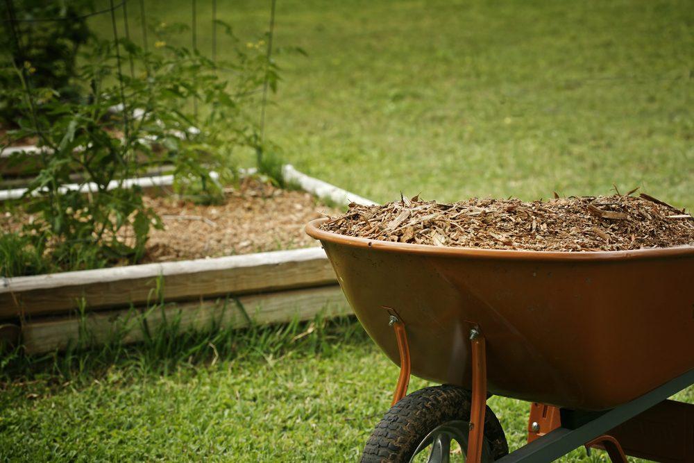 5. Le paillis, une bonne astuce pour cultiver de grosses tomates