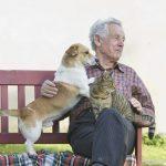 12 conseils de sécurité pour votre animal