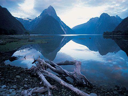 4. Les animaux dangereux sont absents de Nouvelle-Zélande
