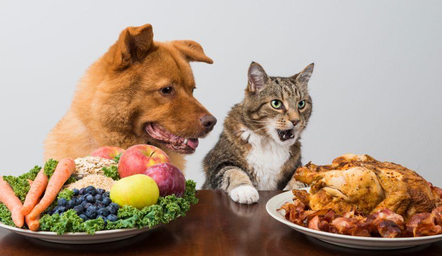 Attention aux aliments crus que vous me donnez!