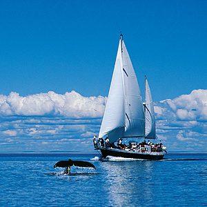 L'observation de baleines dans la Baie de Fundy
