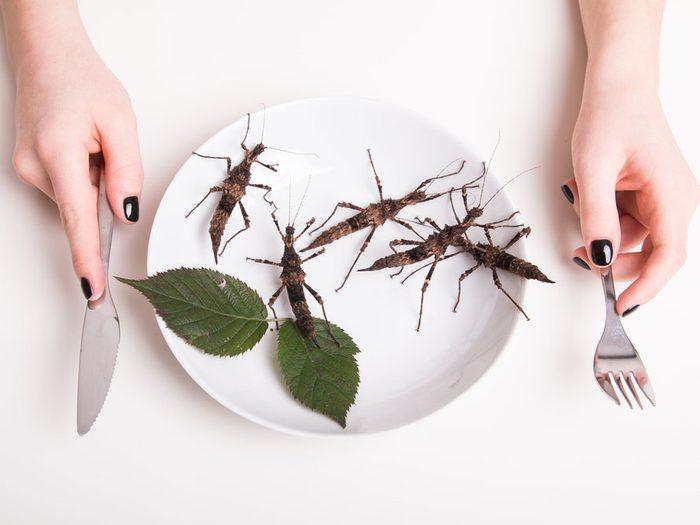La nourriture du futur : fabriquée avec des insectes?