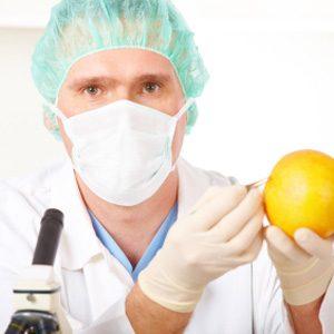 L'avenir des OGM