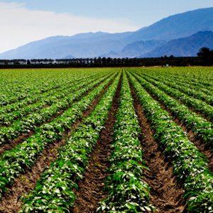 L'avenir de l'agriculture