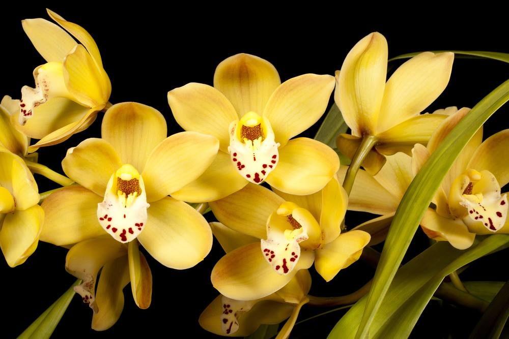 Une orchidée signifie la passion et le désir