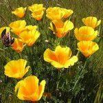 Tirez le maximum de votre budget jardinage