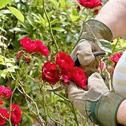 Se protéger les mains au jardin