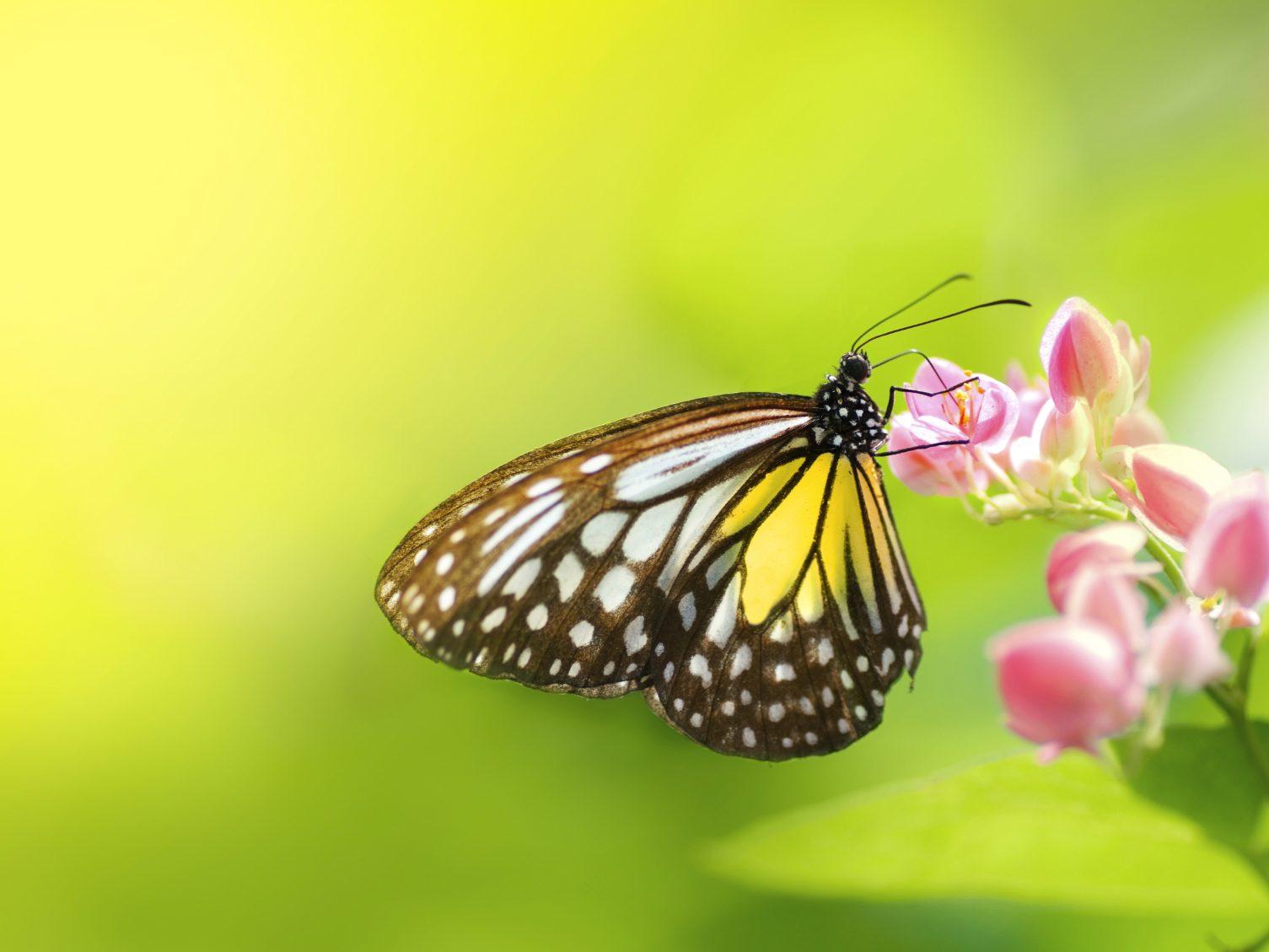 L'univers des papillons à Coconut Creek