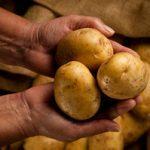 5 façons saines de déguster la pomme de terre