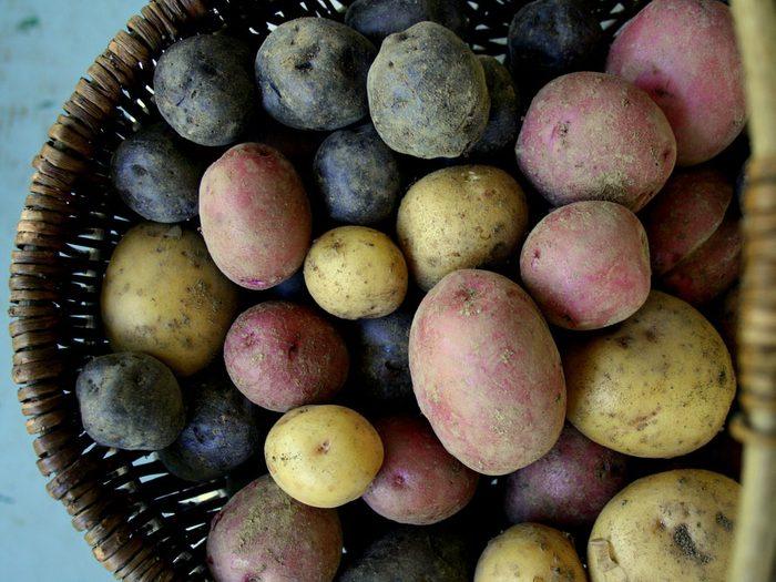 Recyclez vos pommes de terre?