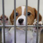 Adoptez un animal de compagnie abandonné