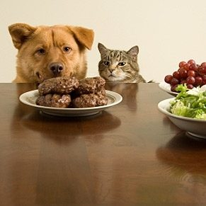 Nourriture maison pour animaux: pensez-y bien!