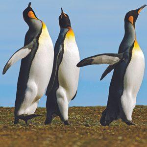 4. Pingouins