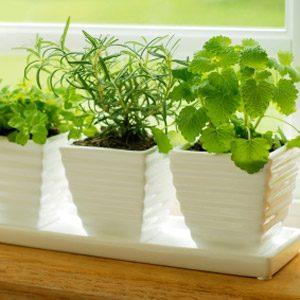 3. Nettoyez vos plantes d'intérieur