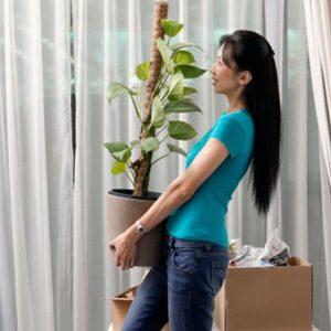 2. La température pour des plantes en santé