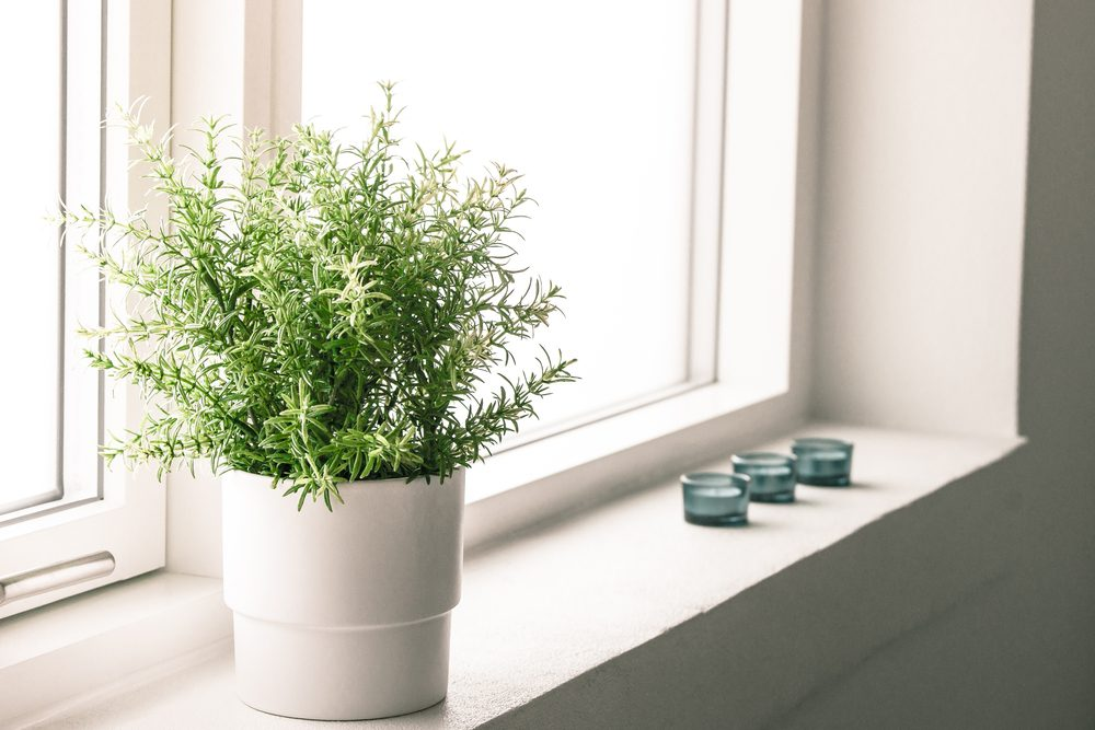 Mettez des plantes dépolluantes si vous rénovez la salle de bain.