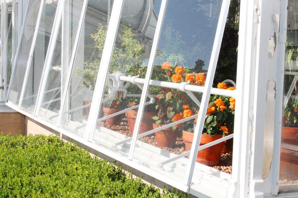Jardin int rieur 6 trucs pour commencer for Jardinage d interieur