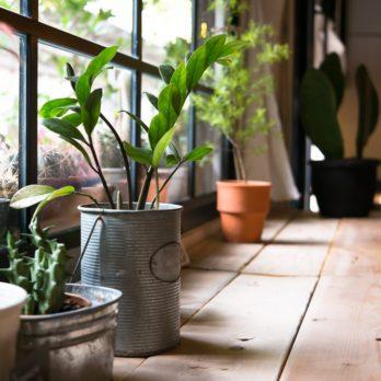 6 trucs pour commencer un jardin d'intérieur