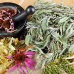 8 plantes médicinales à cultiver à la maison