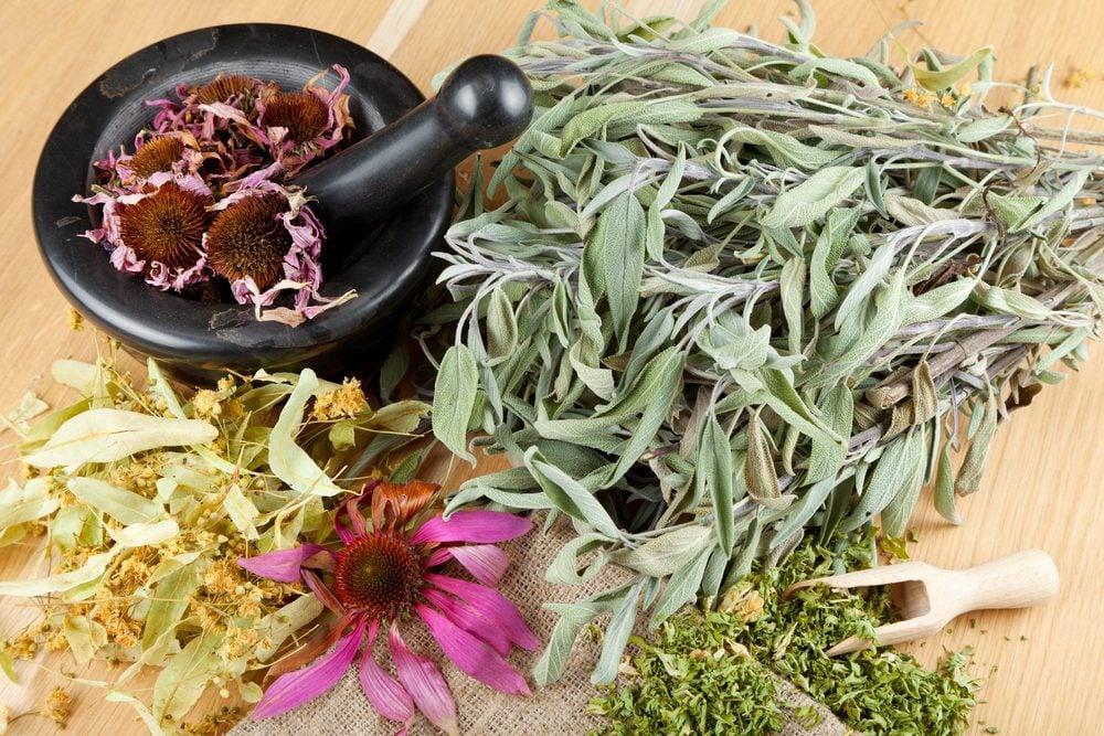 Cultivez des plantes médicinales à la maison.