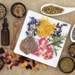 Les plantes: un potentiel santé immense