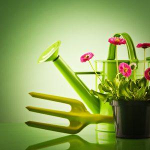 7. Choisissez une plante en boutons.