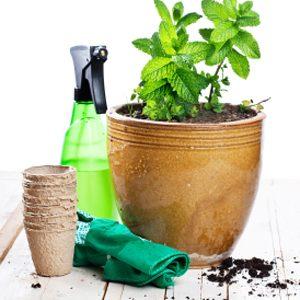 1. Plantez des herbes en pot