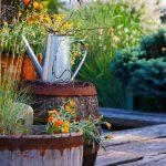 Aménager son jardin et ses plantes