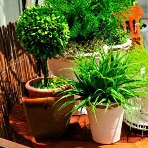 1. L'eau pour des plantes en santé