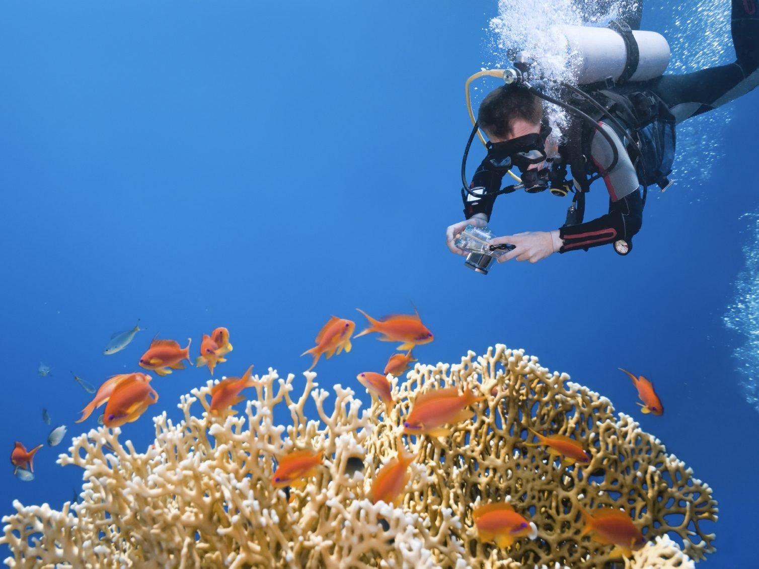 La plongée : voyager, autrement!