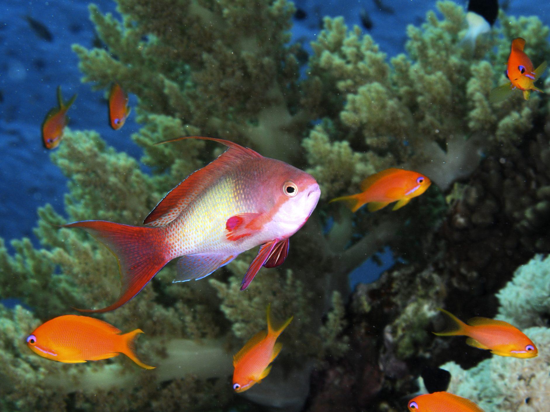 Aquarium et jardin zoologique aquatique de Dubaï