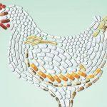 Santé : des antibiotiques dans notre assiette