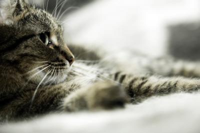 2. Votre chat miaule constamment car il ne se sent pas bien