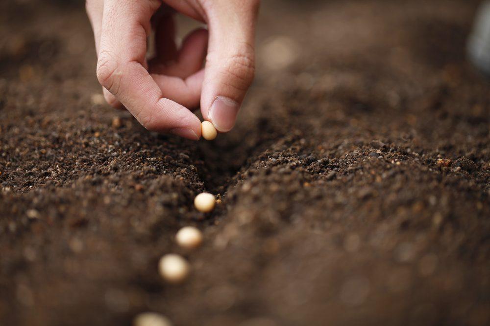 Le sel d'epsom est utile pour préparer le sol.