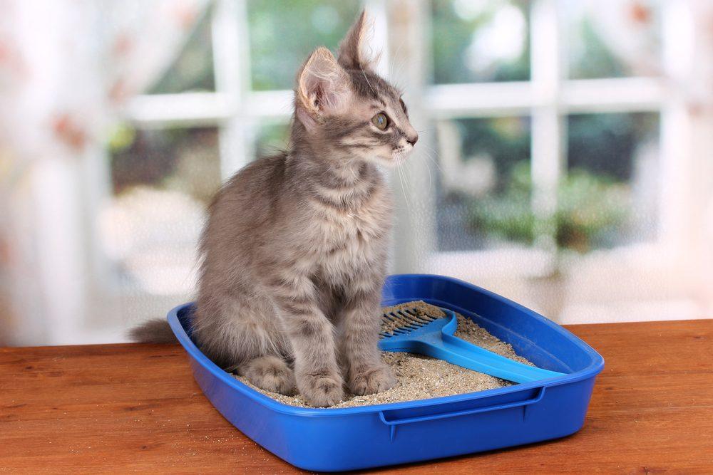 4. Pourquoi les chats utilisent-ils mal leur litière?