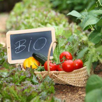 Produits bios : 8 aliments à acheter dès maintenant