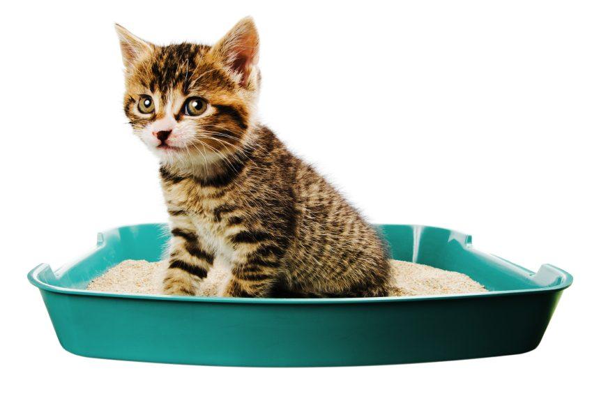 En bon chat, j'ai mon territoire et j'aimerais que vous le respectiez!