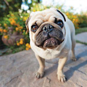 Comment adapter votre cour pour vos animaux cet été