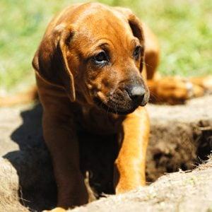 5. Un chien astucieux