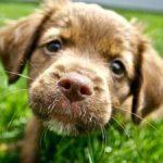 Les 10 races de chien les plus populaires