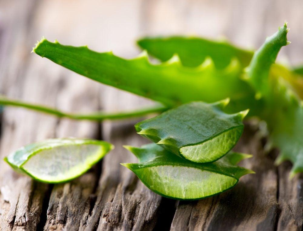 L'aloès est un remède maison pour éliminer la sensation de brûlure de l'herbe à puce