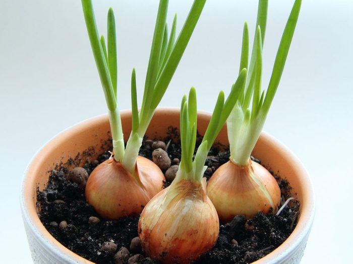 Replanter vos légumes